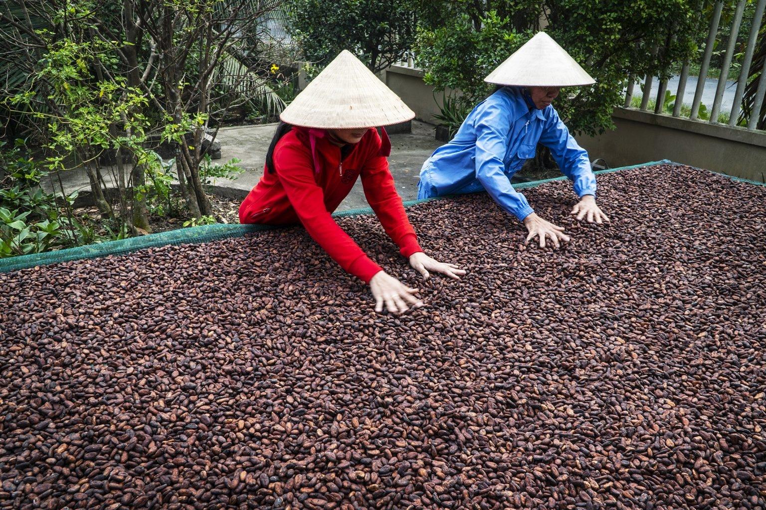 Bao tiêu Hạt cacao