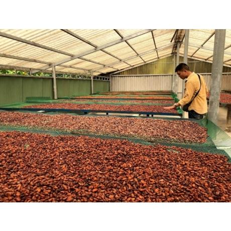 Hạt ca cao xuất khẩu tại Việt Nam